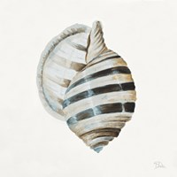 Modern Shell with Teal I Fine Art Print