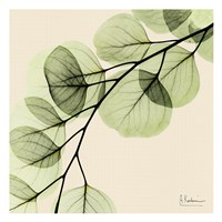 Mint Eucalyptus 1 Framed Print