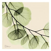 Mint Eucalyptus 2 Framed Print