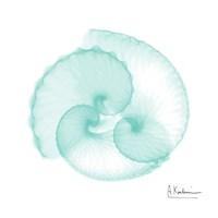 Seafoam Argonaut Fine Art Print