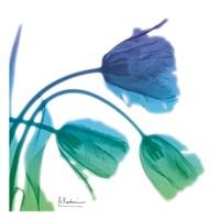 Tulips L83 Turq Blue Fine Art Print