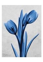 Midnight Tulips Panel Fine Art Print