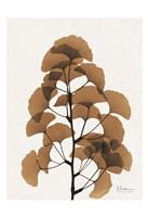 Aged Ginko Fine Art Print