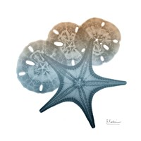 Steel Hues Starfish and Sand Dollar Fine Art Print