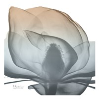Magnolia Earthy Beauty New Fine Art Print