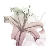 Neapolitan Lily Fine Art Print