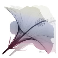 Tasty Grape Hibiscus 2 Fine Art Print