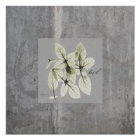 Concrete Basil Fine Art Print