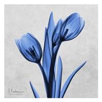 Midnight Tulips Fine Art Print