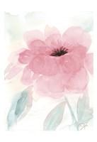 Blush Peony I Framed Print