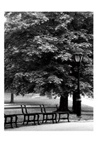 Central Park Benches Fine Art Print