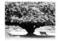 LA Arboretum Fine Art Print