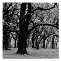 Central Park 2A Fine Art Print