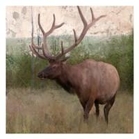 Elk Stride Fine Art Print