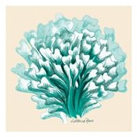 Teal Beige Coral Fine Art Print