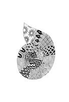 BW Decorated Nautilus Fine Art Print
