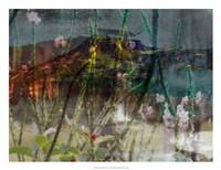 Mountain Wildflowers I Framed Print