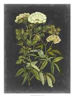 Bookplate Floral I Framed Print