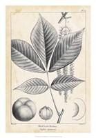 Vintage Hickory Tree Fine Art Print