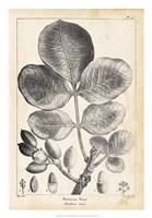 Vintage Pistachio Tree Fine Art Print
