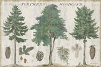 Woodland Chart I Fine Art Print