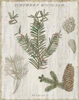 Woodland Chart II Framed Print