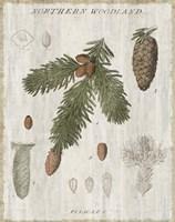 Woodland Chart V Fine Art Print