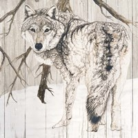 Wolf in Woods on Barn Board Fine Art Print