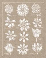 Anemone Plate II Fine Art Print