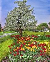 Dorothy's Tulips, Eden Ny Fine Art Print