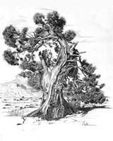 Treesc Fine Art Print