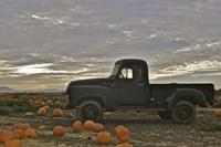 Black Truck In Pumpkin Patch 1 Fine Art Print