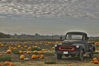 Black Truck In Pumpkin Patch 2 Fine Art Print