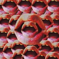 Open Mouths Fine Art Print