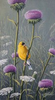 Goldfinch Fine Art Print