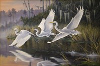 Morning Departure Egrets Fine Art Print