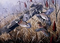 Corner Post Covey - Bobwhite Fine Art Print