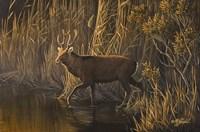 Evening Rounds Sika Deer Fine Art Print