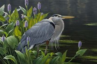 Biding Time Great Blue Heron Fine Art Print
