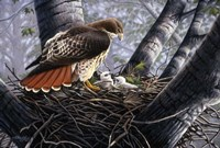 In The Nest Fine Art Print