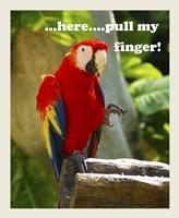 Parrot II with Words Fine Art Print