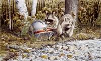 Raccoons Fine Art Print