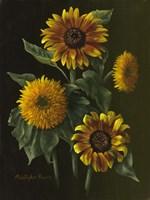 Four Sunflowers Fine Art Print