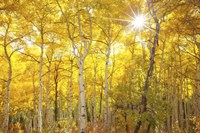 Aspen Morning Fine Art Print