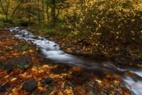 Creekside Colors Fine Art Print