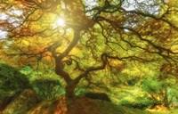 Good Morning Sunshine Fine Art Print