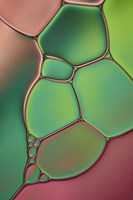 Stained Glass V Fine Art Print