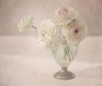 White Persian Buttercups Posy Fine Art Print