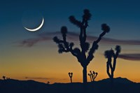 Colored Sky with Moon and Cactus Fine Art Print