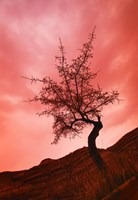 Tree with Pink Sky Fine Art Print